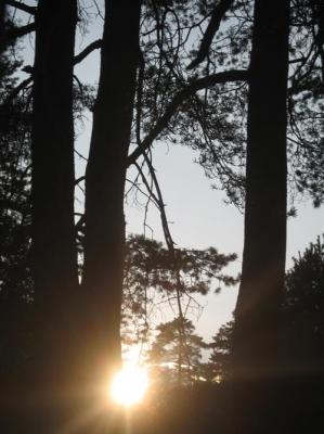 На 1 040 години е най-старото дърво във Варненска област  -