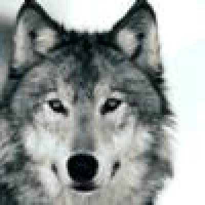 Избрани НОВИНИ от пресата за Вас... - Вълци човекоядци бродят в Русия
