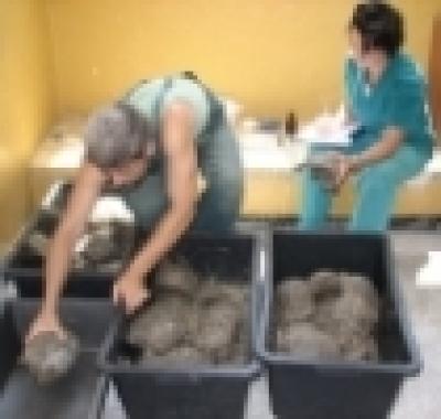 Избрани НОВИНИ от пресата за Вас... - Ловците на костенурки вече са с присъда