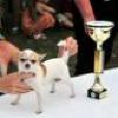 Европейски шампионат за кучета в Бургас
