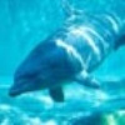 РИОСВ-Варна предприе акция за спасяване на бедстващ делфин в Албена