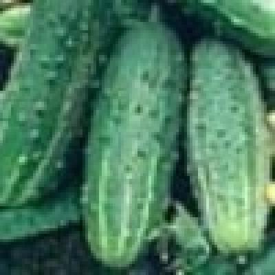 """""""Деформирани"""" плодове и зеленчуци са отново в продажба от днес в ЕС"""