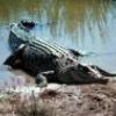 Крокодили бяха откраднати в Австралия