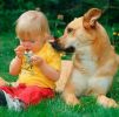 Домашното куче се е появило преди 16 300 г