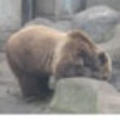 Избрани НОВИНИ от пресата за Вас... - Почти всички мечки в Белица спят зимен сън