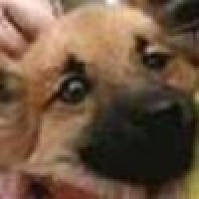 Избрани НОВИНИ от пресата за Вас... - Разложките кинолози подариха куче на премиера Бойко Борисов