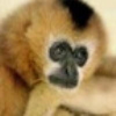 Над 150 000 души са посетили варненския зоопарк