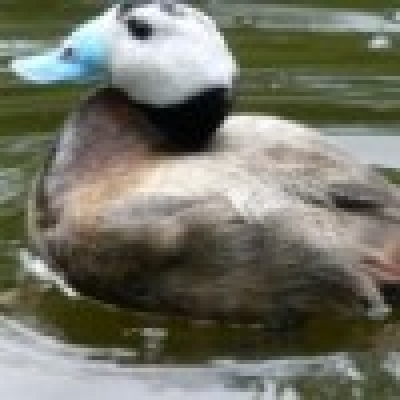 - Увеличават се случаите на обстрелване на застрашени видове птици от бракониери