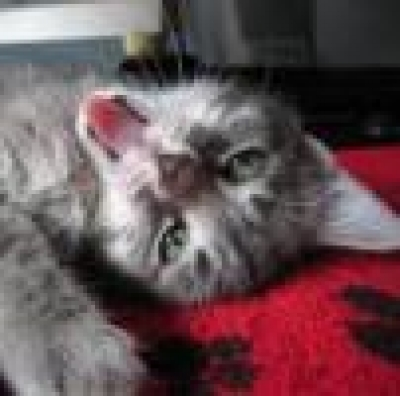Избрани НОВИНИ от пресата за Вас... - Котка предусеща смъртта