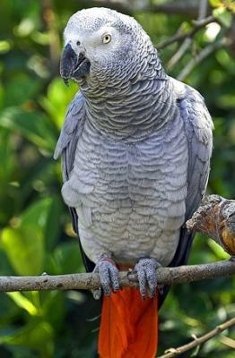 1500 лв. е наградата за този, който намери папагала Жако