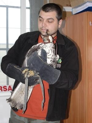 Ивайло Клисуров от Зелени Балкани, с една от птиците
