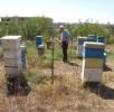 Консумирайте пчелен мед