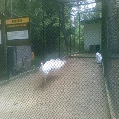 Около 65 000 души са посетили варненския зоопарк  - 1