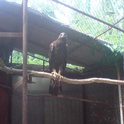 Около 65 000 души са посетили варненския зоопарк  - 5