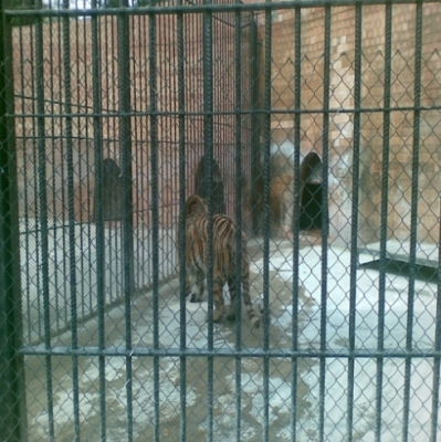 Около 65 000 души са посетили варненския зоопарк за първото шестмесечие на годината 6