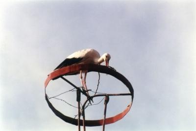 Обезопасяване на щъркелови гнезда  - 2