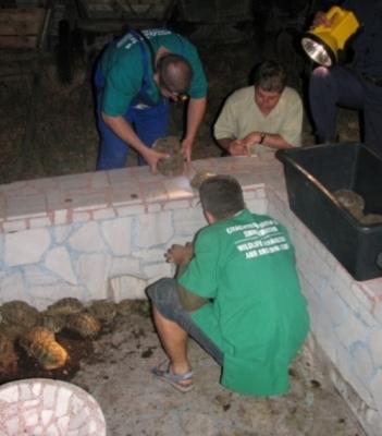 153 костенурки спасени от служители на реда! - Приемане3