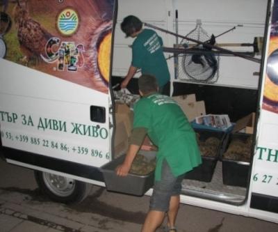 153 костенурки спасени от служители на реда! - Приемане