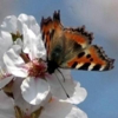 Учени превръщат пеперуди в хомосексуалисти, за да спасят реколта