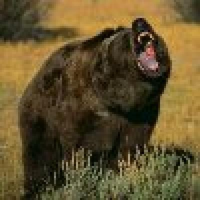 Избрано от Пресата за Вас... - 20 мечки бродят из село