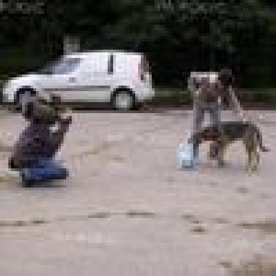 Избрани НОВИНИ от пресата за Вас... - Обучение на кучета-спасители и техните водачи