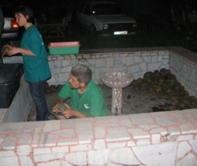 153 костенурки спасени от служители на реда! - Приемане2