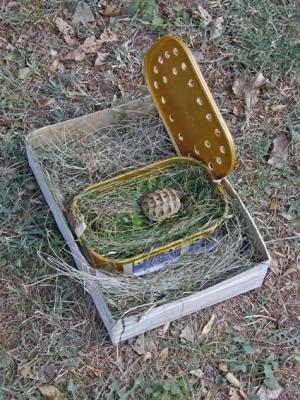 Новите пациенти в Спасителния център - Малка шипобедрена костенурка (Testudo graeca) в луксозна опаковка