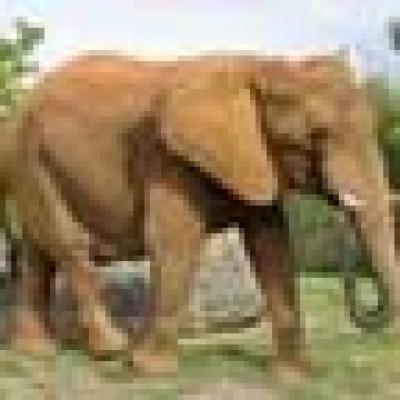 Забраняват цирковите представления с животни