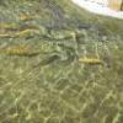 От пресата... - Със 75 хиляди балкански пъстърви зарибиха притоците на река Лом