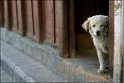 Ловят бездомни кучета със стрели