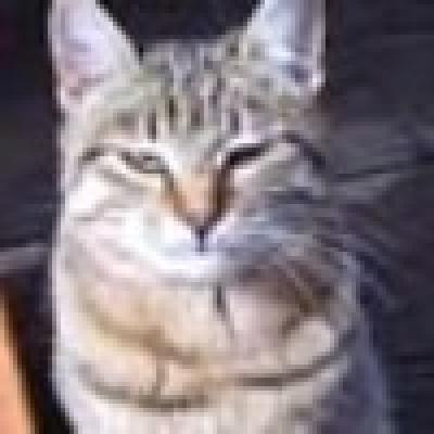 Котката, която ухапа четирима души  е била болна от бяс