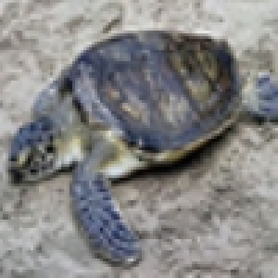 Опит за продажба на 150 сухоземни костенурки от защитен вид