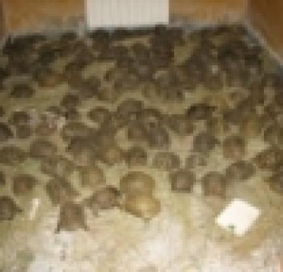 153 костенурки спасени от служители на реда!