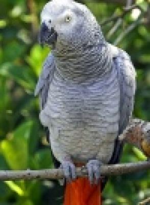 Избрани НОВИНИ от пресата за Вас... - 1500 лв. награда за намерен папагал