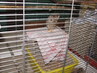 Изчезнал вид се завръща в България - Птиците вече са отгледали първото си поколение във Валсроде