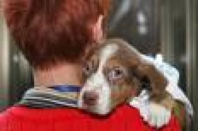 осиновяване на кучета