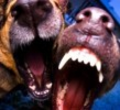 Избрани НОВИНИ от пресата за Вас... - Телеграф каза:Наше куче по-силно от лъва