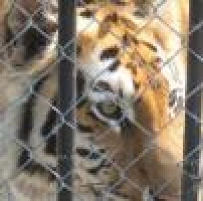 Глобиха собственика на тигрите и ягуара