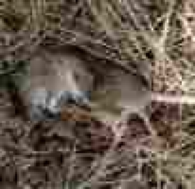 Животни гинат в Сакар