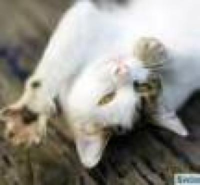 Котките *експлоатират* хората с мъркане