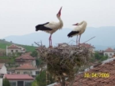 Спасено щъркелово гнездо
