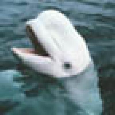 Йонийско море губи делфините си