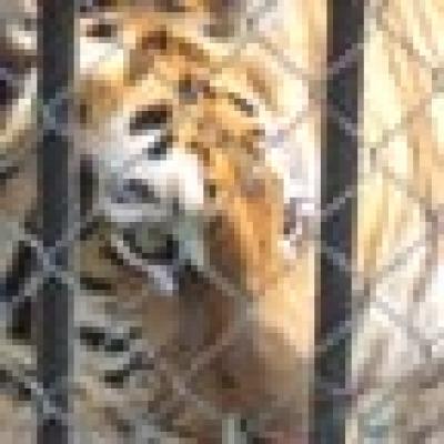 Три животни от семейство хищници са се родили