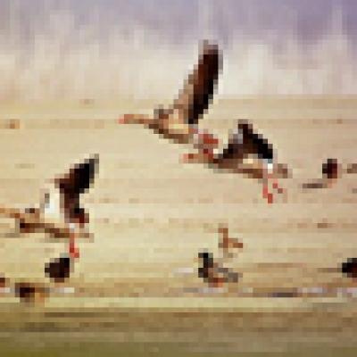 фазани и яребици