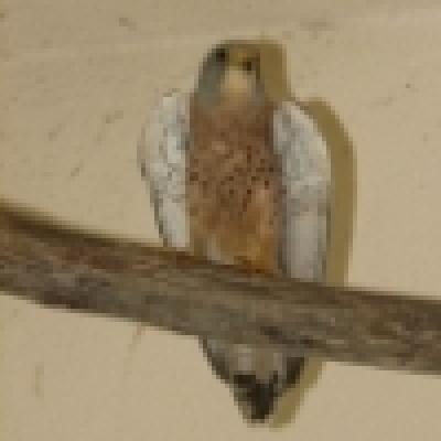 Изчезнал вид се завръща в България