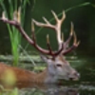 Шест държавни ловни участъка в Шуменско ще се стопанисват от частни фирми