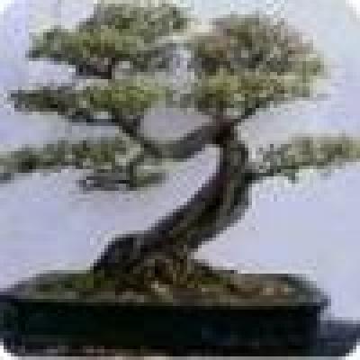 Свищовският химически комбинат ще добива целулоза от китайско дърво