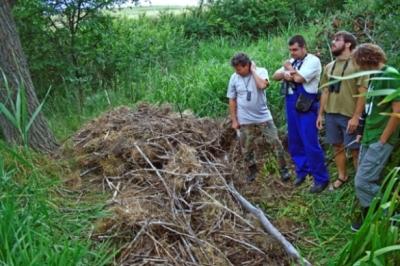 Гнездо на морски орел бе разрушено - Падналото гнездо