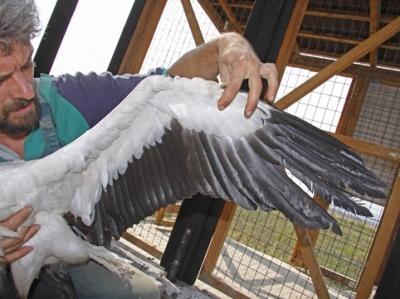 Новите пациенти в Спасителния център - ... и крилата ...