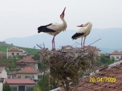 Спасено щъркелово гнездо1